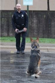 K-9 Brutus Obedience